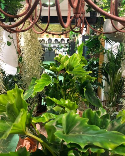 Philodendron and candelabra